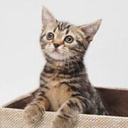 みんなの猫図鑑