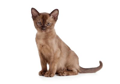 みんなの猫図鑑 - ヨーロピアン...